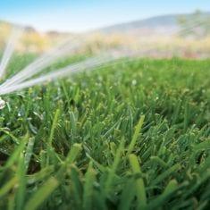 Auckland garden irrigation