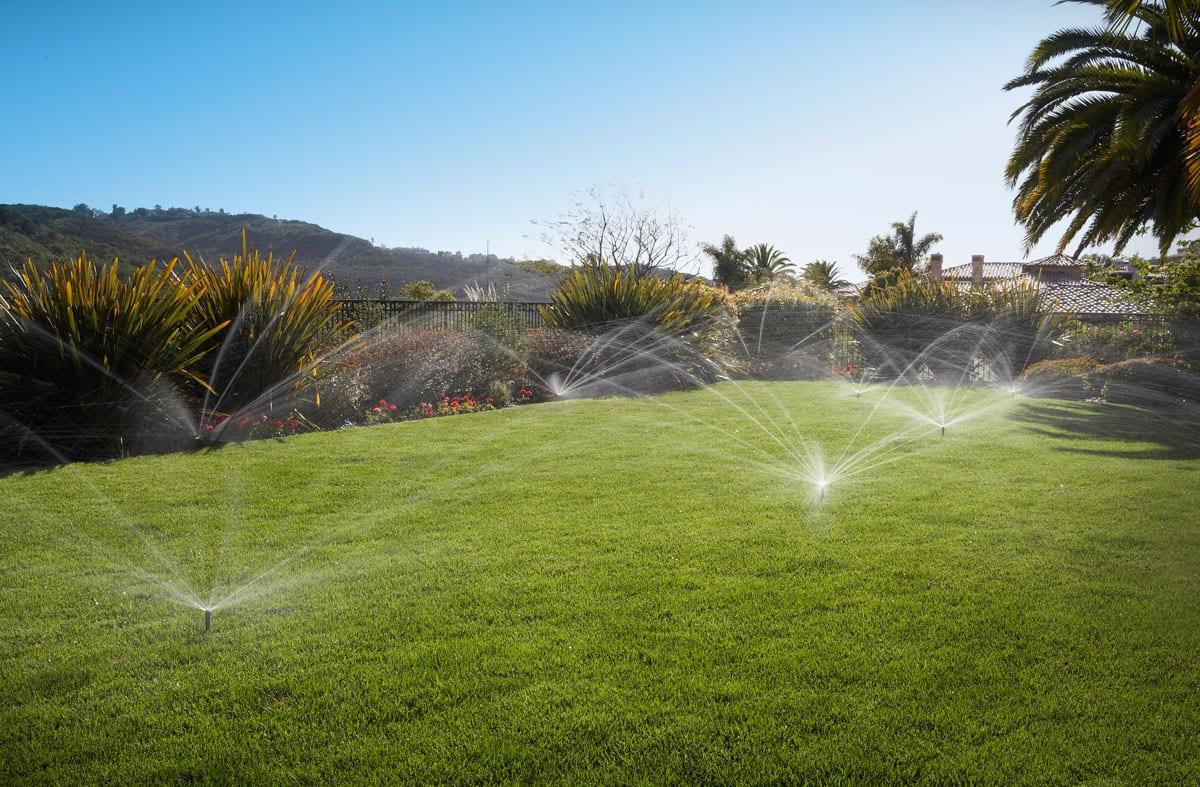 Regular grass watering Auckland